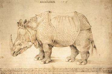 Rhino-Durer