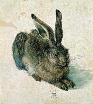 Field-hare