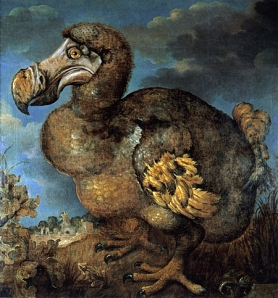 Jan-Savery-dodo-1651