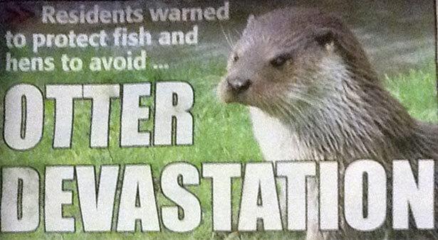 Otter-Devastation