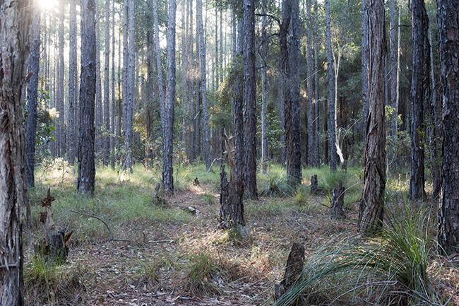 Empty forest in sunlight